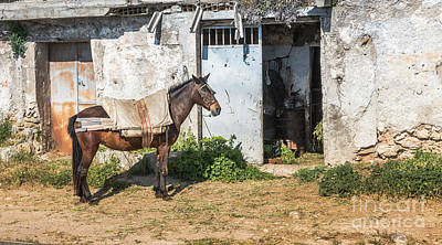 Photograph - Horse  In Front Of House In Andalusia by Compuinfoto