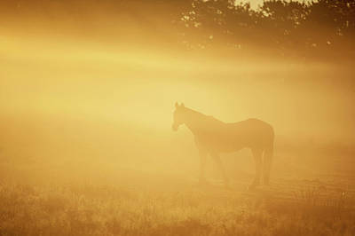 Photograph - Horse In Golden Field by Jenny Rainbow