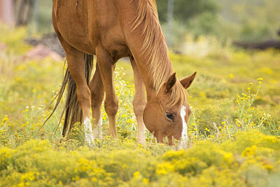 Horse Ears Photograph - Horse In Golden Meadow by Stephanie McDowell