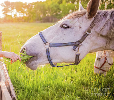 Photograph - Horse In Heaven With Love by Peggy Franz