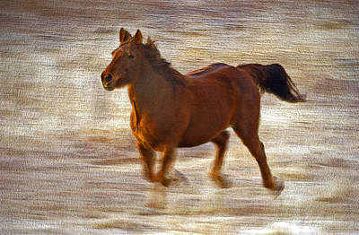 Photograph - Horse In Motion by James Steele
