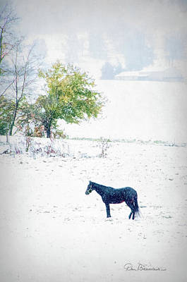 Dan Beauvais Royalty-Free and Rights-Managed Images - Horse in Snowy Pasture 7596 by Dan Beauvais