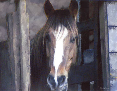 Horse In Stall Art Print by Joe Halinar