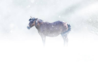 Photograph - Horse In Storm by Jarrod Erbe