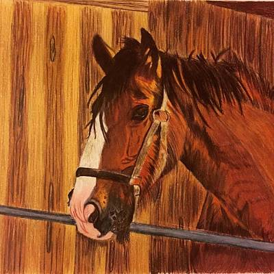 Horse Lovers Drawing - Horse In The Barn by Urvashi Patel