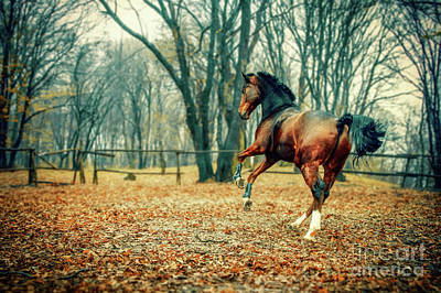 Photograph - Horse In The Beautiful Forest by Dimitar Hristov