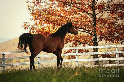Photograph - Horse In The Beautiful Shine Autumn Forest by Dimitar Hristov