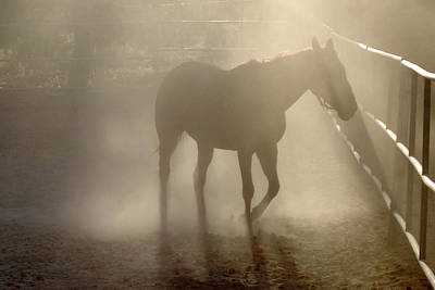 Photograph - Horse In The Dust Late Afternoon by Cheryl Dean