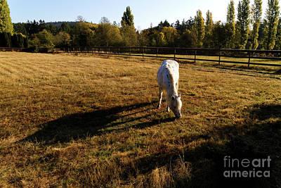 Photograph - Horse In The Fall Sun by Sue Harper
