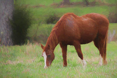 Painting - Horse In The Field 1106 - Painting by Ericamaxine Price