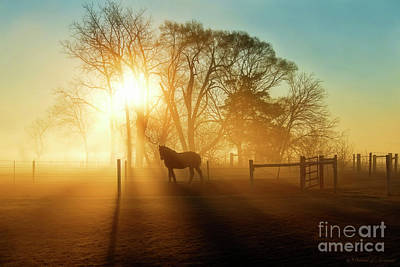 Photograph - Horse In The Fog At Dawn by David Arment