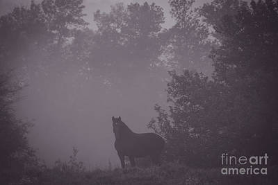 Photograph - Horse In The Fog by Cheryl Baxter
