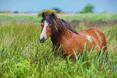 Painting - Horse In The Marsh - Painting by Ericamaxine Price