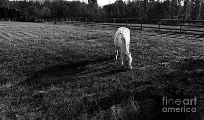 Photograph - Horse In The Morning Sun by Sue Harper