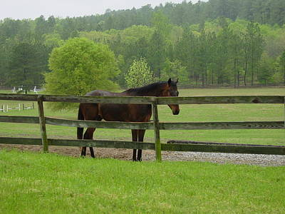 Photograph - Horse In The Pasture by Quwatha Valentine