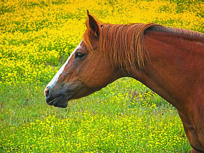 Photograph - Horse In Yellow Field by Wendy McKennon