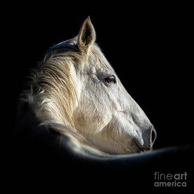 Photograph - Horse by Kim Clune