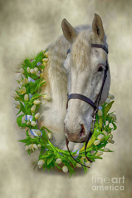 Photograph - Horse by Linsey Williams