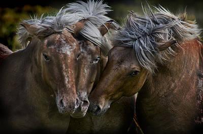 Horse Lords Original