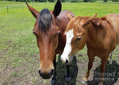 Photograph - Horse Love by Cassy Allsworth