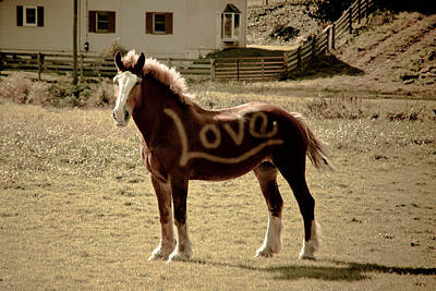 Photograph - Horse Love by Trish Tritz