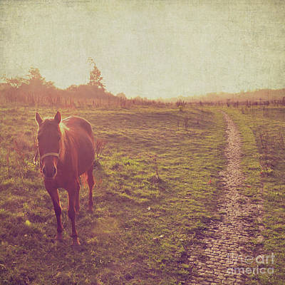 Photograph - Horse by Lyn Randle