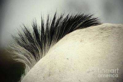 Photograph - Horse Mane by Dimitar Hristov