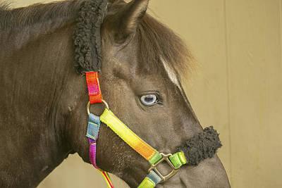 Photograph - Horse by Michel DesRoches