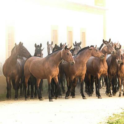 Photograph - Horse Moms by Edgar Laureano