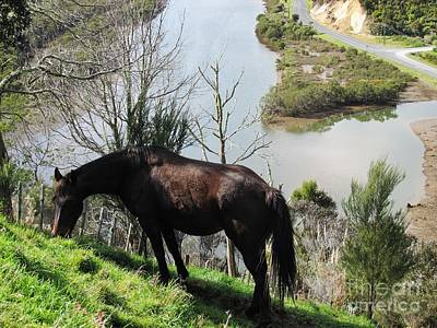 Photograph - Horse On A Hillside by Dianne  Connolly