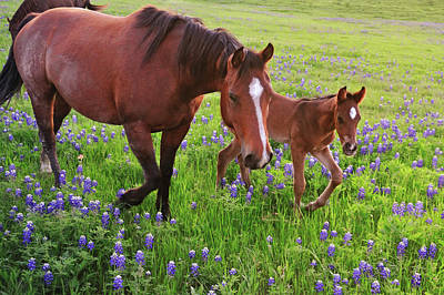 Horse On Bluebonnet Trail Art Print by David Hensley