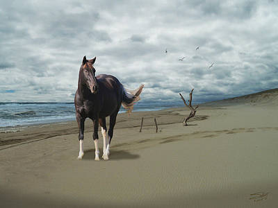 Photograph - Horse On Deserted Shore by IM Spadecaller