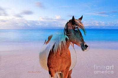 Photograph - Horse On The Beach by Annie Zeno