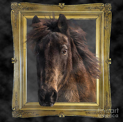 Photograph - Horse Out Of Frame by Joann Long