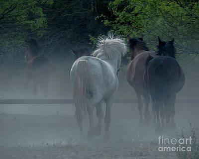 Horse 8 Art Print