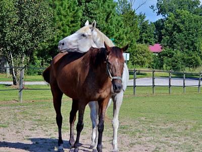 Photograph - Horse Photobomb by Cynthia Guinn
