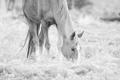 Horse Ears Photograph - Horse Photograph Black And White by Stephanie McDowell