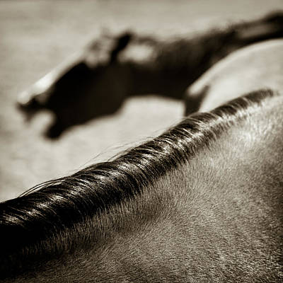 Photograph - Horse Play by Dave Bowman