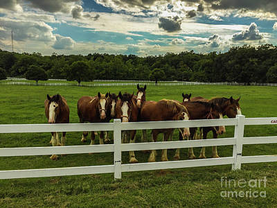 Photograph - Horse Play by Jason Sullivan