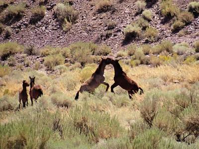 Photograph - Horse Play by Joshua Bales