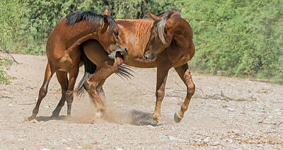 Photograph - Horse Play by Tam Ryan