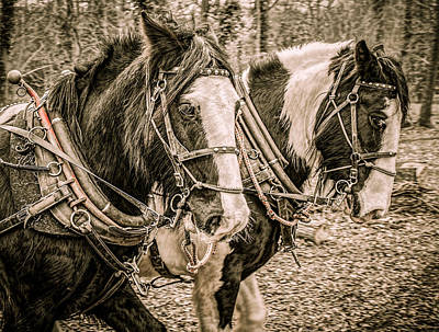 Horse And Cart Digital Art - Horse Portrait 2 by Roy Pedersen