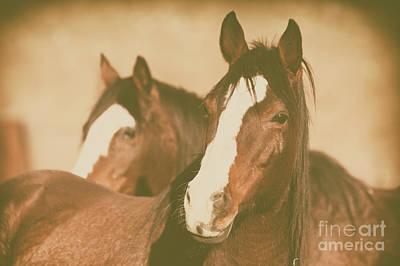 Photograph - Horse Portrait by Ana V Ramirez