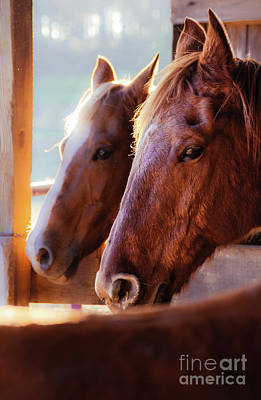 Photograph - Horse Portrait by Andrea Anderegg