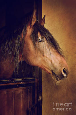 Photograph - Horse Portrait by Carlos Caetano