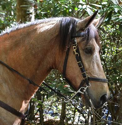 Photograph - Horse Portrait - Crisco by rd Erickson