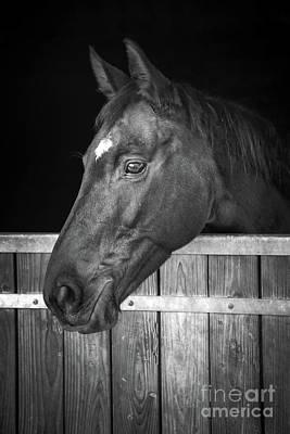 Art Print featuring the photograph Horse Portrait by Delphimages Photo Creations