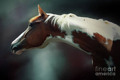 Photograph - Horse Portrait by Dimitar Hristov