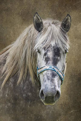 Gray Horses Photograph - Horse Portrait I by Tom Mc Nemar