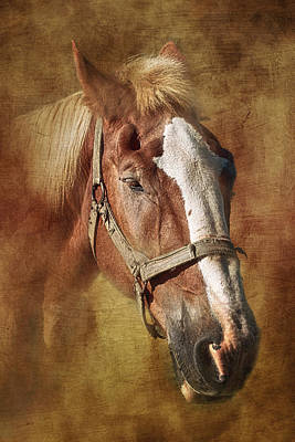 Bridle Photograph - Horse Portrait II by Tom Mc Nemar